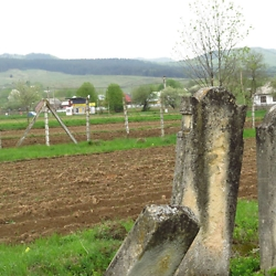 The Jewish cemetery in Solca, with a view of the Bukovina hills and the town in the background. CREDIT: Timothy Ryan Mendenhall