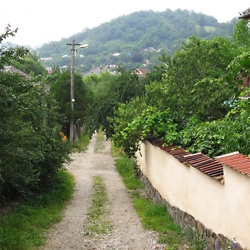 Dirt lane near the outskirts of Medias. Most private gardens are filled with fruit trees and grape vines, like the house to the right. CREDIT: Timothy Ryan Mendenhall