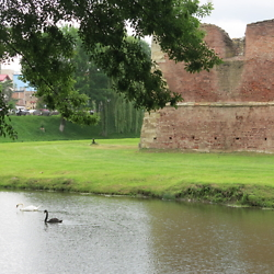 Swans in the moat surrounding the castle in Făgăraș. CREDIT: Benjamin Fox-Rosen.